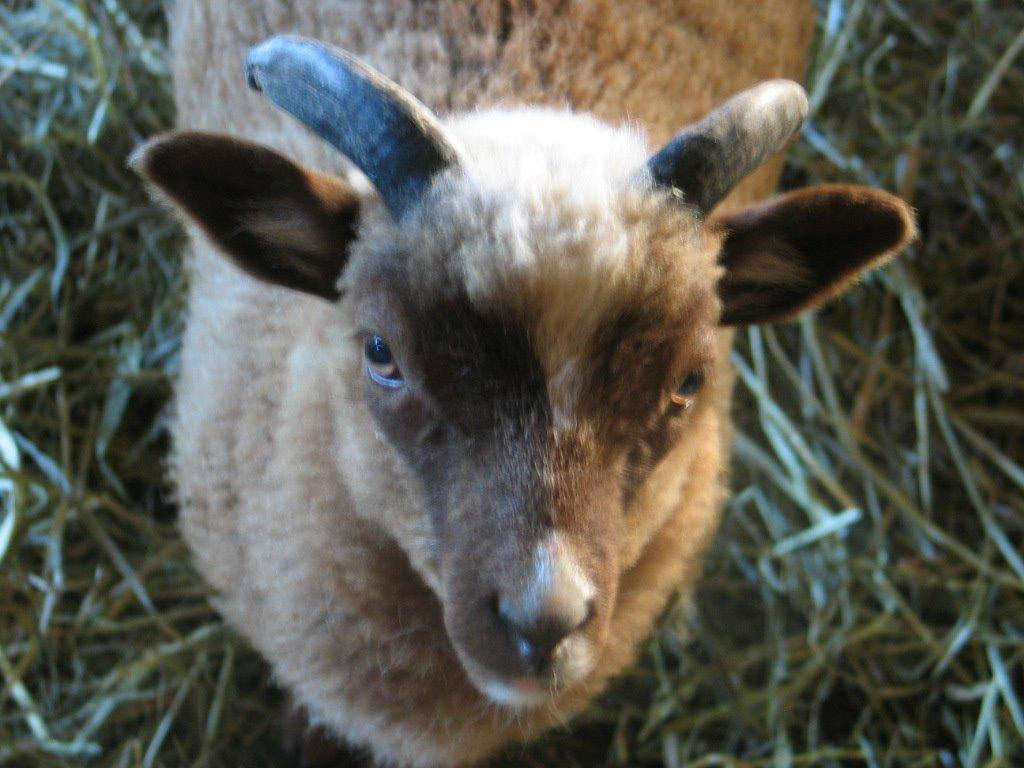 Blind Faith Farm: My Fantasy Fleece